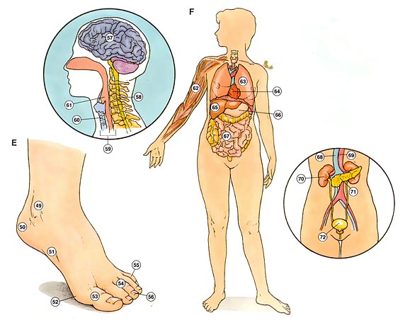 el cuerpo 2